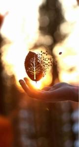 autumn-changingwiththeseasonspost-found on weheartit.com- and pininterest,SarahLaRose