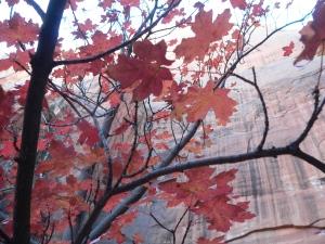 P1110565(autumnleaves)