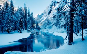 Blue-Winter