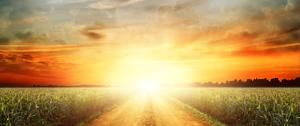 bright-path