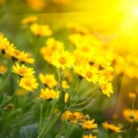 Wildflower Mantras