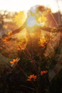 Dance in the Summer's Golden light; shine from the light within