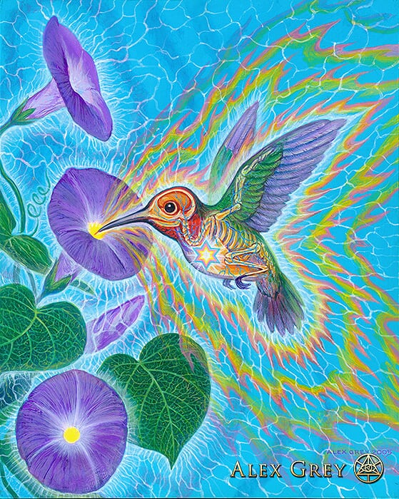 Alex_Grey_Humming_Bird
