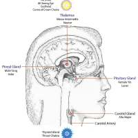 The 3rd Eye Hypothesis